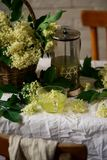 Thé de fleur de sureau Vintage de style Photo libre de droits