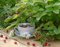 Thé de fraise Images libres de droits