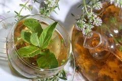 Thé de la collecte des herbes et de la menthe medicative dans un transparen photographie stock