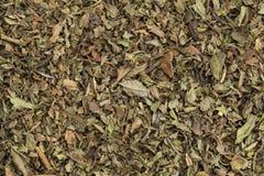Thé de menthe poivrée photographie stock libre de droits