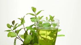 Thé de plante de menthe poivrée et de menthe poivrée banque de vidéos