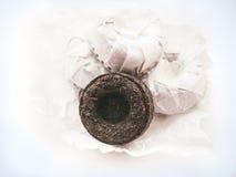 Thé de Puer sur le fond blanc Photo stock