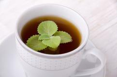 thé en bon état noir Le thé le plus de première qualité Photographie stock libre de droits