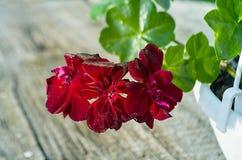 Thé et fleurs Image libre de droits