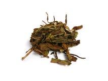Thé et herbes normales Image stock
