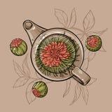 Thé fleurissant Illustration Stock