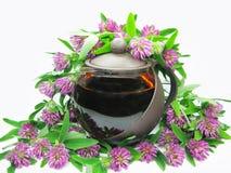 Thé floral de trèfle dans la théière Photos libres de droits