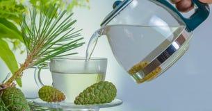 Thé frais de cône de pin Photo stock