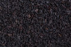 Thé noir de corossol hérisse Textere Photos stock