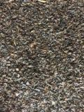 Thé noir en vrac photo libre de droits