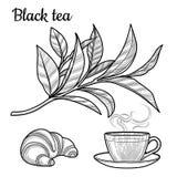 Thé noir Une tasse de thé, une boisson chaude Une branche avec des feuilles croissant illustration stock