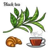 Thé noir Une tasse de thé, une boisson chaude Une branche avec des feuilles croissant illustration de vecteur
