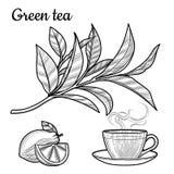 Thé noir Une tasse de thé, une boisson chaude Une branche avec des feuilles croissant illustration libre de droits