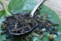 Thé vert et cuillère abstraits des feuilles de thé vertes sèches sur le fond de feuille photos libres de droits