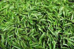 Thé vert frais Photographie stock