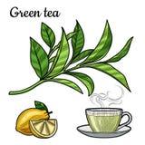 Thé vert Une tasse de thé, une boisson chaude Une branche avec des feuilles Citron, tranche de citron illustration stock