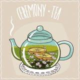 Théière en verre avec le thé de camomille Photographie stock libre de droits