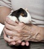 Thérapie d'animal familier Image libre de droits