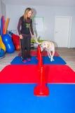 Thérapie de chien Photographie stock libre de droits
