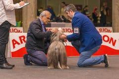 22th国际狗展示希罗纳2018年,西班牙 库存图片