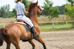 18th 2008 вызванная articolo1681 лошадь дома eventidellavita варианта comunedivigevano d comune конкуренции линия http HTML скача Стоковые Фото