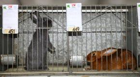 68th молочные скоты внешнеторговой ярмарки стоковое фото