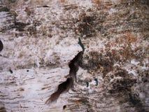 9th текстура фото в июле предпосылки 2009 принятая утесом Стоковое Фото