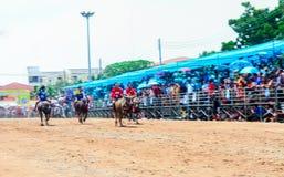 143th фестиваль гонок буйвола 7-ого октября 2014 Стоковые Фото