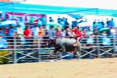 143th фестиваль гонок буйвола 7-ого октября 2014 Стоковое Изображение