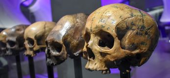 Roman skulls part of the `Glory and Gore` Exhibition, Museum of London royalty free stock photos