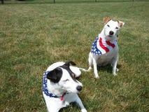 4th av Juli den gulliga hundkapplöpningamerikanska flaggan Royaltyfri Bild