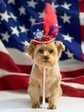 4th av Juli den patriotiska hunden Arkivbilder