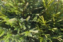 2010 28th background christmas december detail isolated over photo taken tree white στοκ φωτογραφία με δικαίωμα ελεύθερης χρήσης