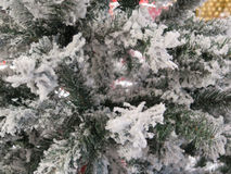 2010 28th background christmas december detail isolated over photo taken tree white στοκ φωτογραφία