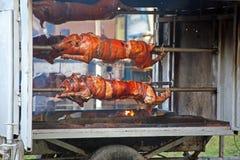 50th dias da cultura 'de Kaj', Krapina 2015 Croácia, Europa, 5 Fotos de Stock Royalty Free