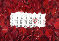 The 14th of February. The calendar date of the 14th of February, St Valentine's day in rose petals Stock Image