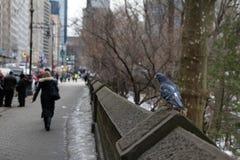59th gata NYC Arkivbild