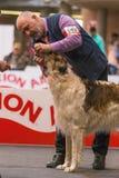 22th INTERNATIONAL DOG SHOW GIRONA 2018,Spain. 22th INTERNATIONAL DOG SHOW GIRONA March 17, 2018,Spain, Russian wolfhound Stock Photo