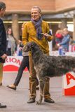 22th INTERNATIONAL DOG SHOW GIRONA 2018,Spain. 22th INTERNATIONAL DOG SHOW GIRONA March 17, 2018,Spain, Scottish deerhound Royalty Free Stock Images