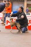 22th INTERNATIONAL DOG SHOW GIRONA 2018,Spain. 22th INTERNATIONAL DOG SHOW GIRONA March 17, 2018,Spain Stock Photo