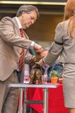 22th INTERNATIONAL DOG SHOW GIRONA 2018,Spain. 22th INTERNATIONAL DOG SHOW GIRONA March 17, 2018,Spain Royalty Free Stock Image