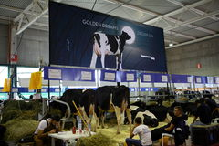 68th International Trade Fair Dairy Cattle Stock Photography