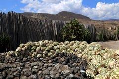 Th jeleń od agawy dla robić Mescal lub Mezcal w Meksyk, Oaxaca Obrazy Stock