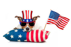 4th of july independence day dog. Jack russell dog celebrating 4th of july independence day holidays with american flag and sunglasses, isolated on white Stock Photos