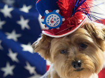 4th of July Patriotic Dog with hat. Yorkie celebrates 4th of July with a red, white and blue hat and a flag background. Vertical stock photos