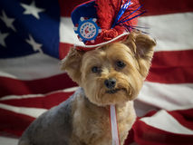 4th of July Patriotic Dog with Red, White and Blue Hat. Cute Yorkie Dog wearing patriotic top hat with 4th of July theme with an American flag in the background stock images