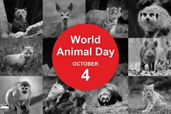 World animal day. 4th October. World animal day Royalty Free Stock Photography