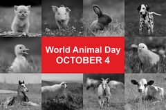 World animal day. 4th October. World animal day stock photography