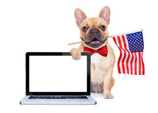 4th oh july dog. French bulldog  dog waving a flag of usa on independence day on 4th  of july , isolated on white background, behind a blank empty computer pc Royalty Free Stock Photo