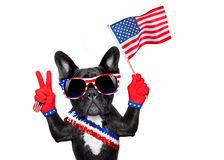 4th oh july dog. French bulldog  waving a flag of usa on independence day on 4th  of july , isolated on white background,  victory or peace fingers Royalty Free Stock Images